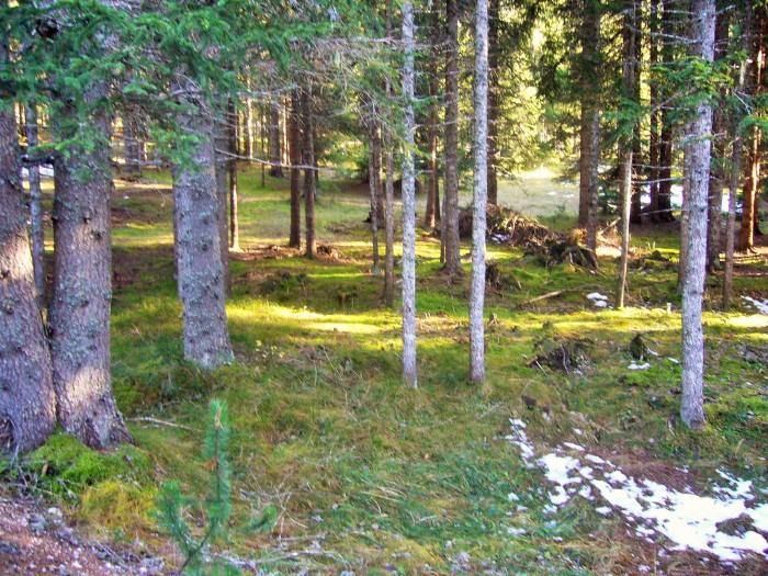 lunga ciclovia delle Dolomiti 034 (2)